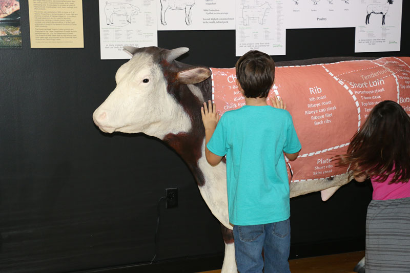 Legacy-of-Ranching-exhibit-promo-pics-photos-by-David-Anaya-(3)